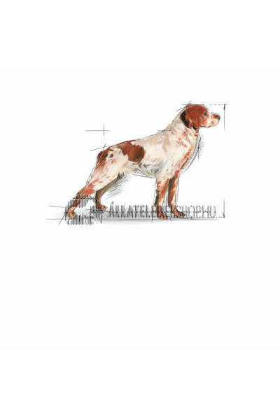 Royal Canin - Medium Adult 7+ Mature kutyatáp 15kg