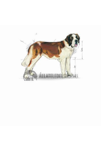Royal Canin - Giant Junior kutyatáp 15kg