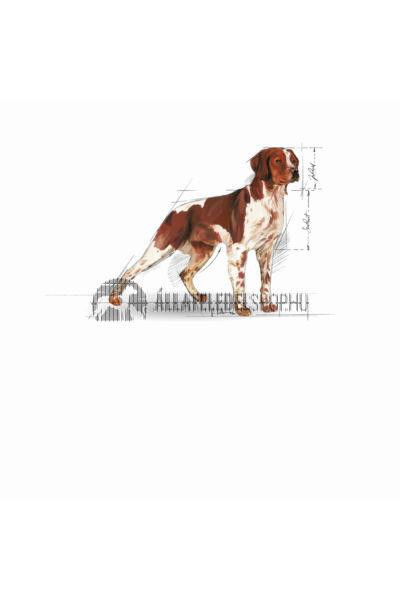 Royal Canin - Medium Adult kutyatáp 4kg