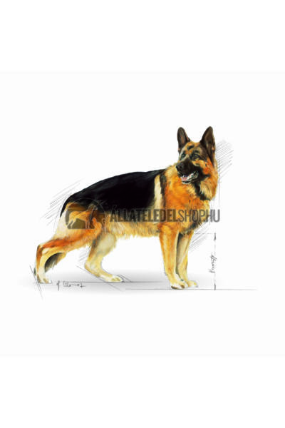 Royal Canin - German Shepherd Adult kutyatáp 3kg