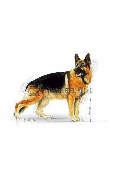 Royal Canin - German Shepherd Adult kutyatáp 3kg