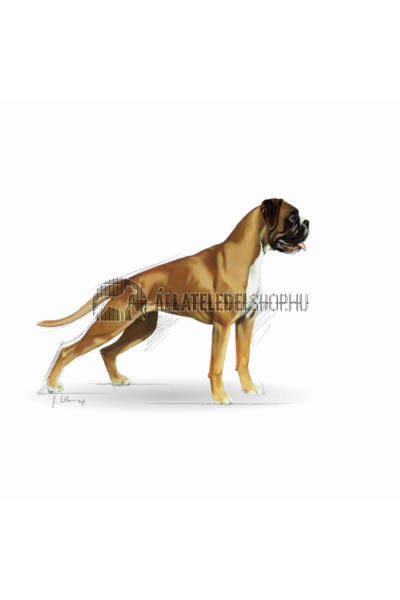 Royal Canin - Boxer Adult kutyatáp 3kg
