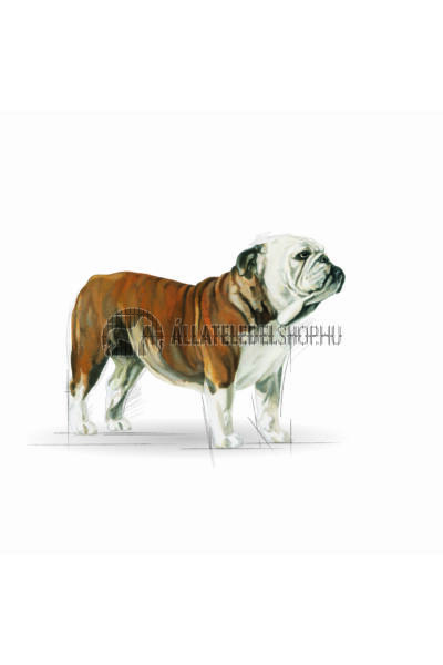 Royal Canin - Bulldog Adult kutyatáp 3kg
