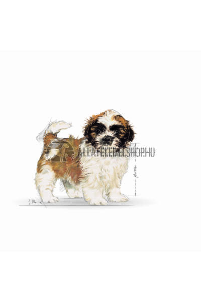 Royal Canin - Shih Tzu Junior kutyatáp 0,5kg