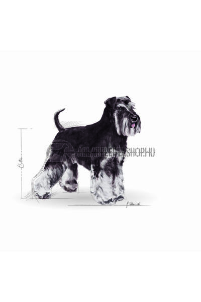 Royal Canin - Miniature Schnauzer Adult kutyatáp 0,5kg