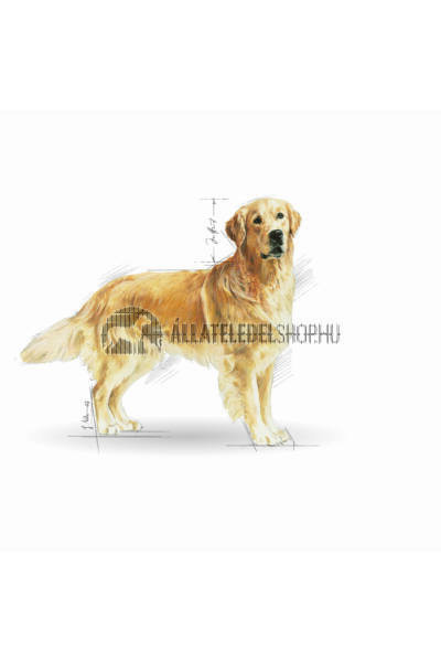 Royal Canin - Golden Retriver Adult kutyatáp 12kg