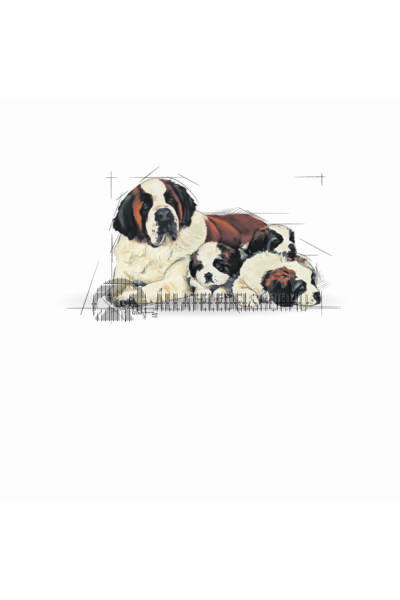 Royal Canin - Giant Sarter Mother & Babydog kutyatáp 4kg