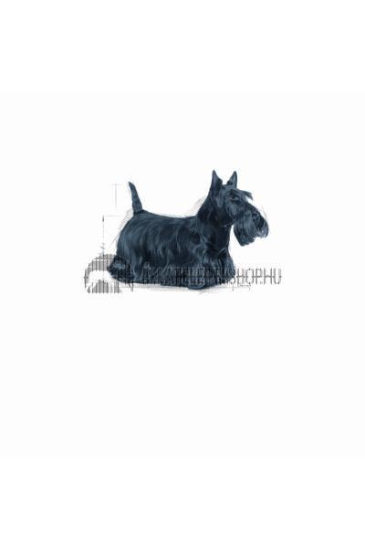 Royal Canin - Mini Dermacomfort hypoallergén kutyatáp 8kg
