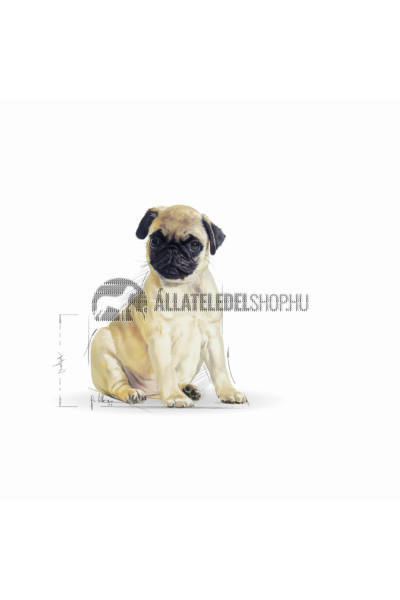 Royal Canin - Pug Junior kutyatáp 0,5kg
