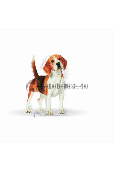 Royal Canin - Beagle Adult kutyatáp 12kg