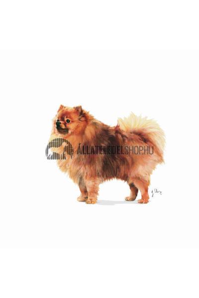 Royal Canin - Indoor Life Adult Small kutyatáp 0,5kg
