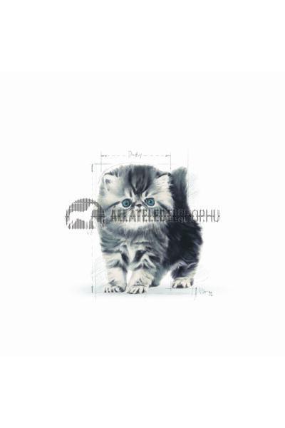 Royal Canin - Cat Persian Kitten macskatáp 400g