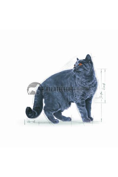 Royal Canin - Cat British Shorthair Adult macskatáp 4kg
