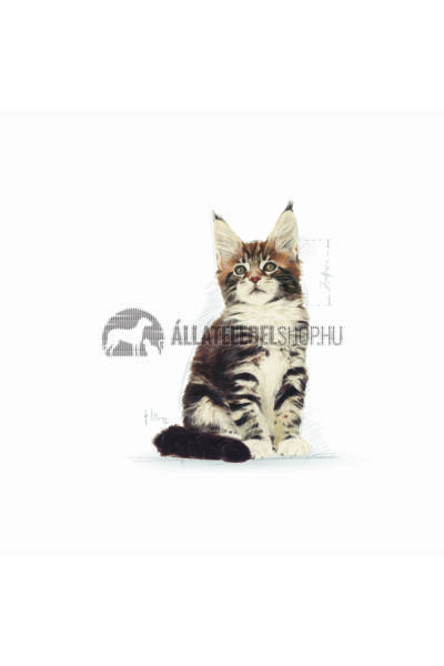Royal Canin - Cat Maine Coon Kitten macskatáp 400g