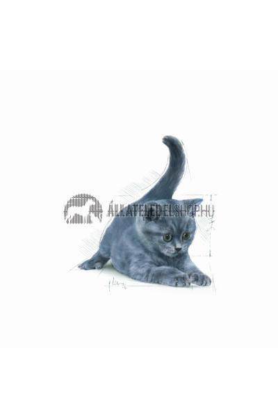 Royal Canin - Cat British Shorthair Kitten macskatáp 2kg