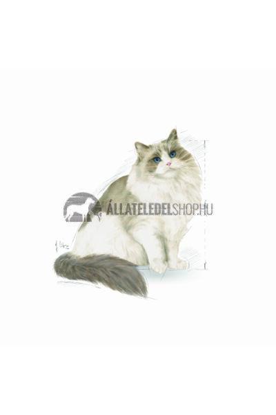 Royal Canin - Cat Ragdol Adult macskatáp 10kg