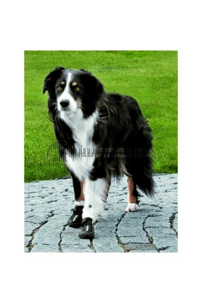Trixie - Walker Active Kutyacipő M-L 2db/Csomag